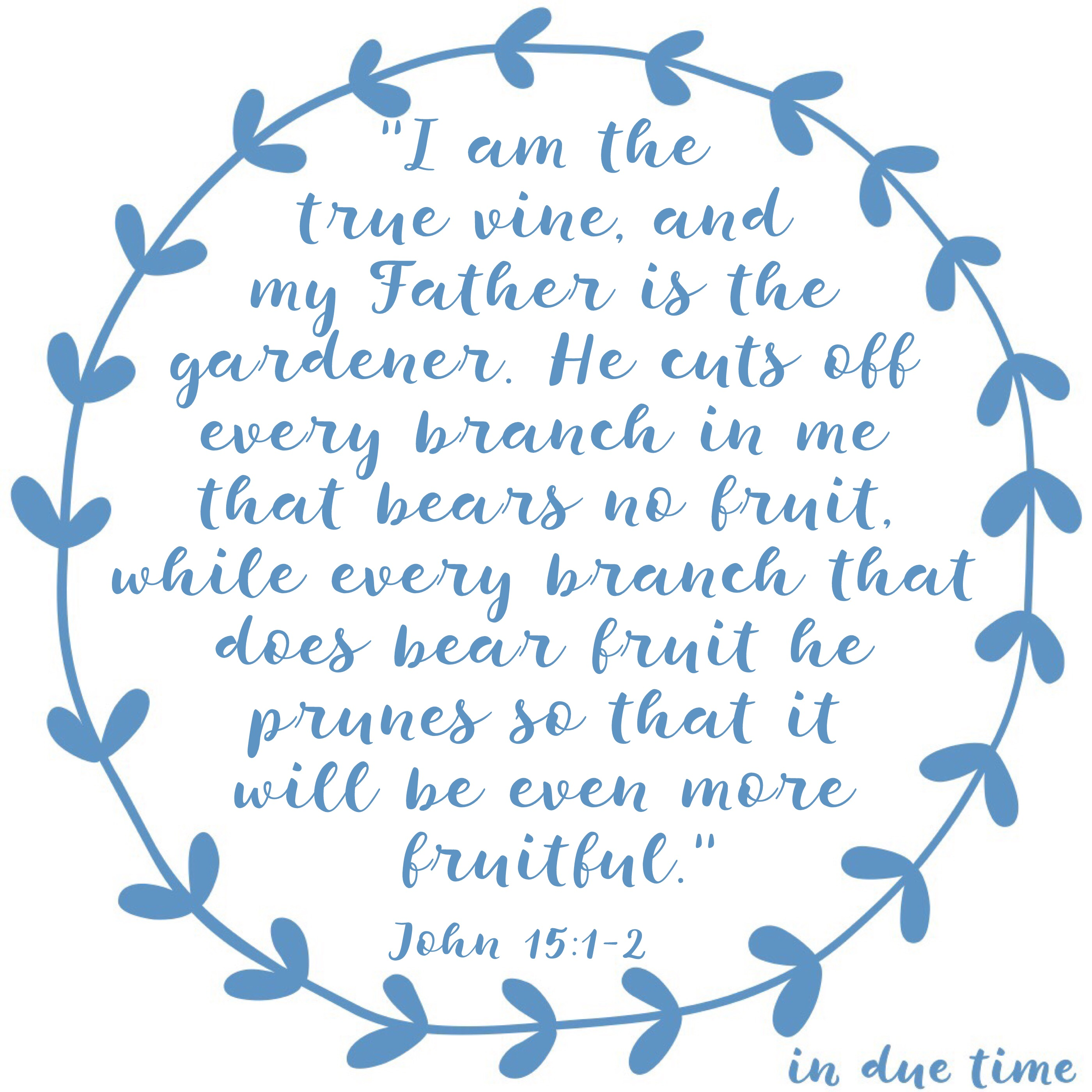 I am the vine - in due time blog