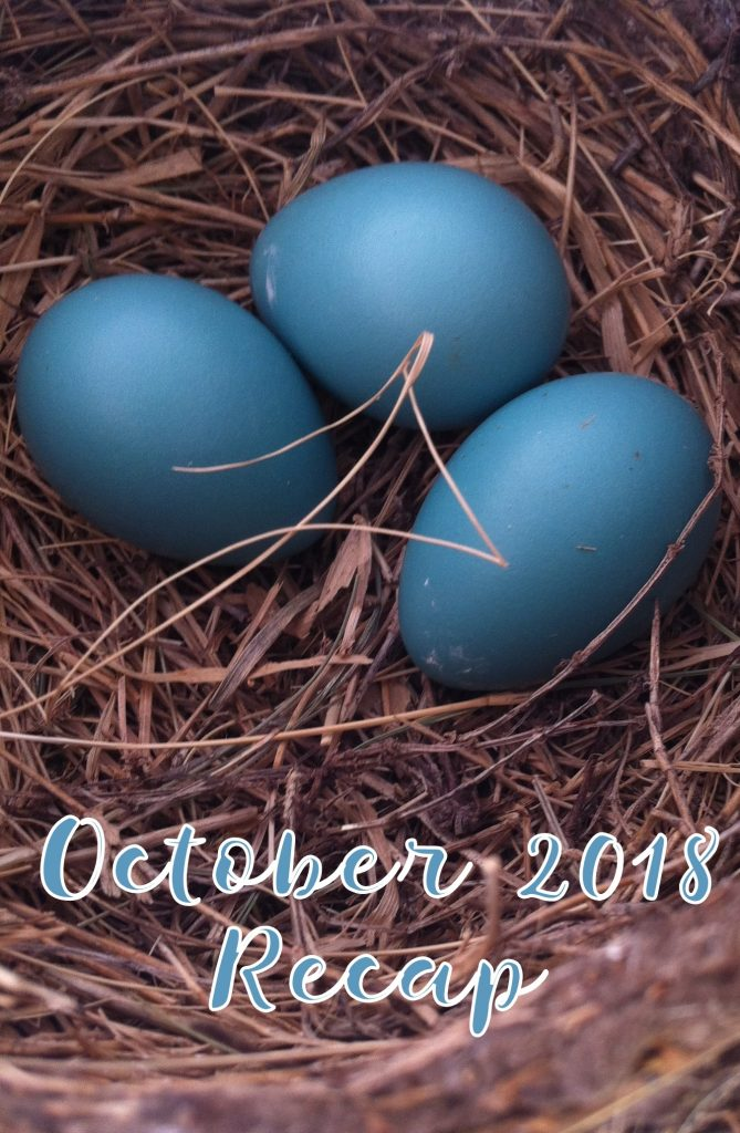October 2018 recap in due time blog picture