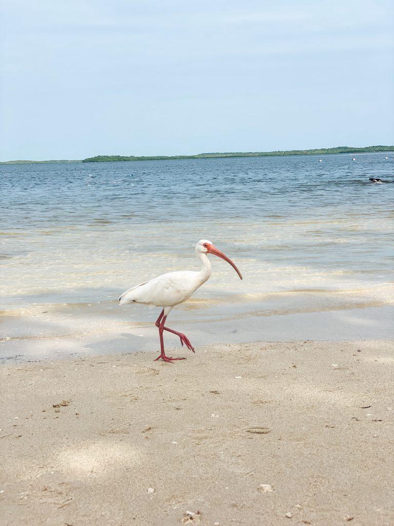 Florida Keys Key Largo beach Vacation In Due Time Blog1