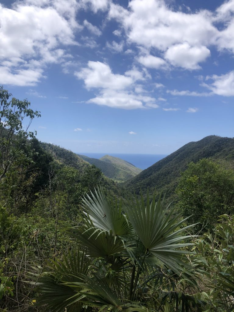 St John Reef Trail Hike View Greenery JPG
